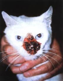 анализ крови на аллергию гемотест