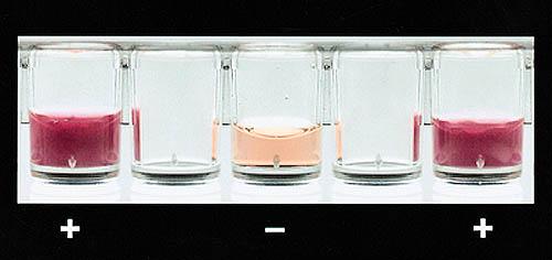 Тесты бактерии под - e5183